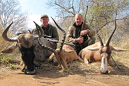 Blue Wildebeest, Impala and Blesbuck with Kukama Hunting Safaris